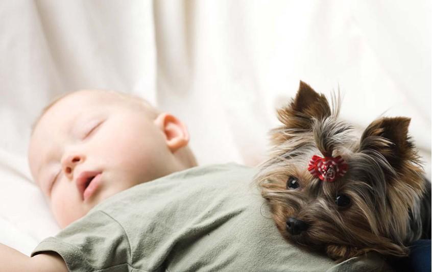 Σκύλος - Επαφή με μωρά