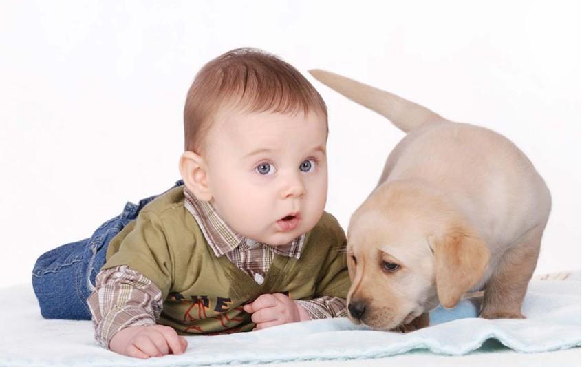 Μωρό και κατοικίδια. Σκυλιά και γάτες. Τι πρέπει να προσέχετε.