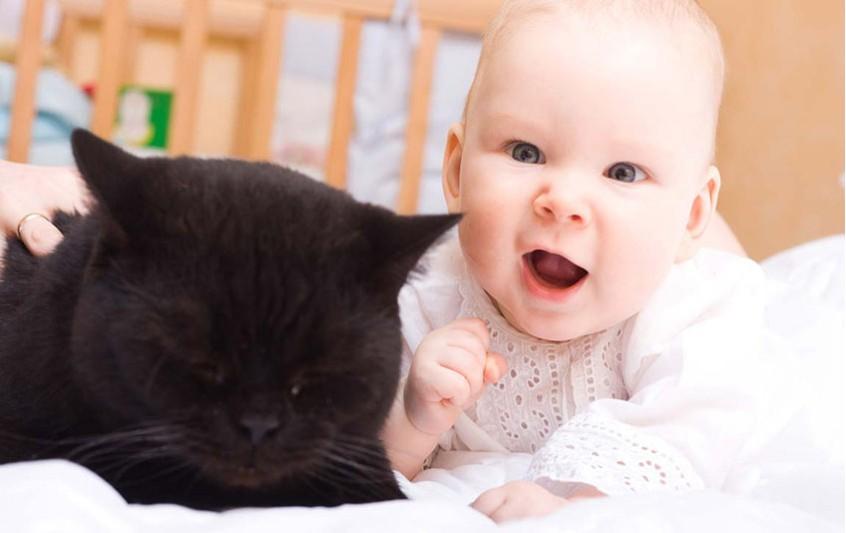 Γάτα - Επαφή με μωρά