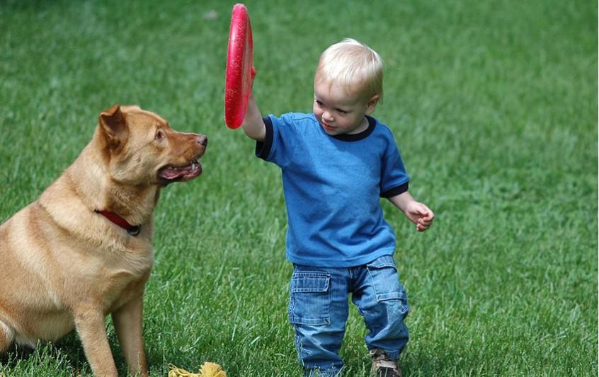 Σκύλος - Επαφή με παιδιά